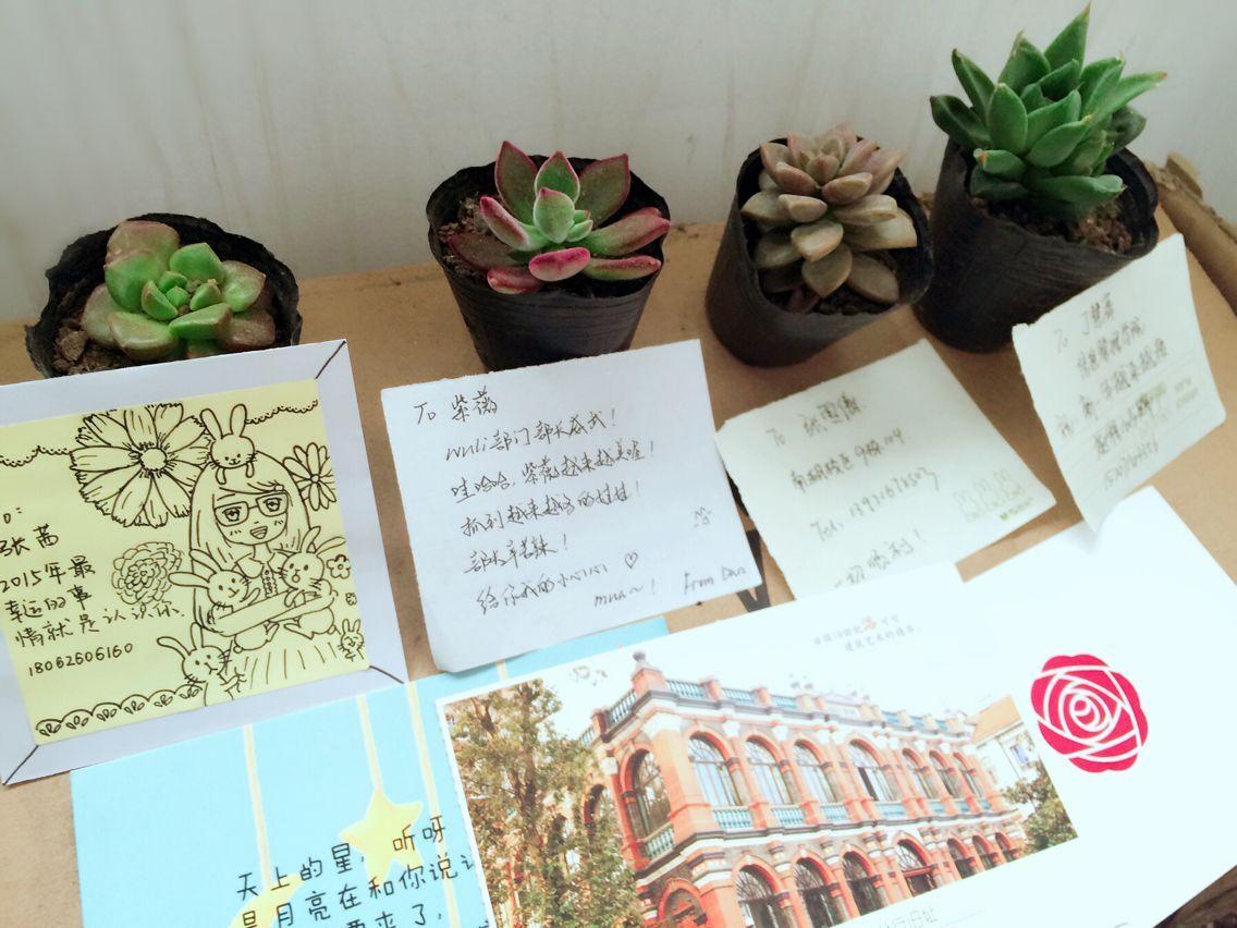 绿植及明信片展示